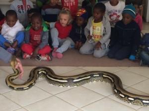 3 - 6years Reptile City